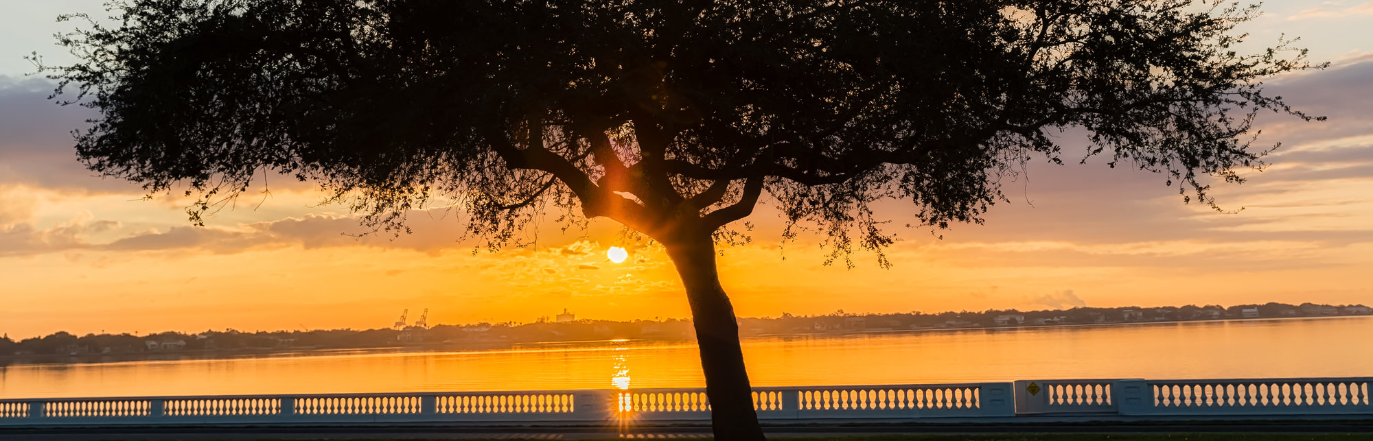 Bayshore Oak Sunrise